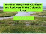 microbial manganese oxidizers and reducers in the columbia river