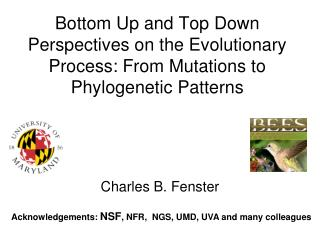Bottom Up and Top Down Perspectives on the Evolutionary Process:  From Mutations to  Phylogenetic  Patterns