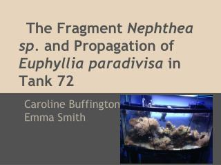 The Fragment  Nephthea sp.  and Propagation of  Euphyllia paradivisa  in Tank 72