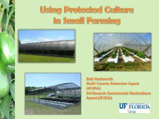 Using  Protected Culture  in Small Farming