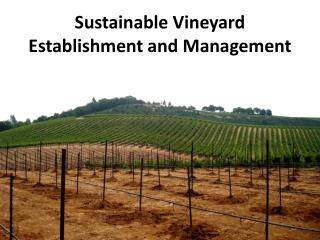Sustainable Vineyard Establishment and Management