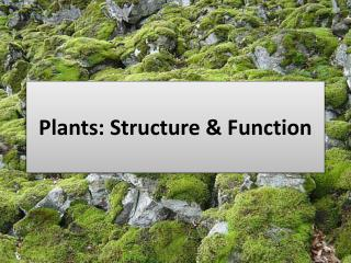 Plants: Structure & Function
