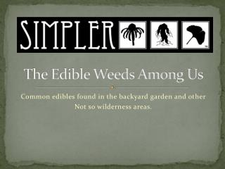 The Edible Weeds Among Us