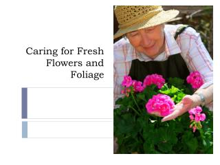 Caring for Fresh Flowers and Foliage