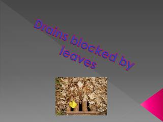 Drains blocked by leaves