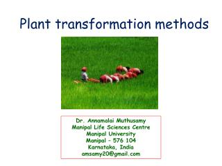 Plant transformation methods