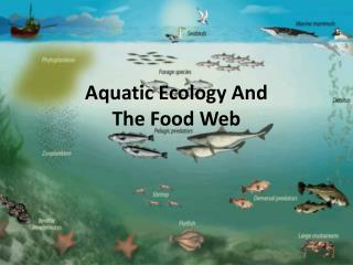 Aquatic Ecology And The Food Web