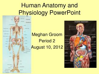 Human Anatomy and Physiology PowerPoint