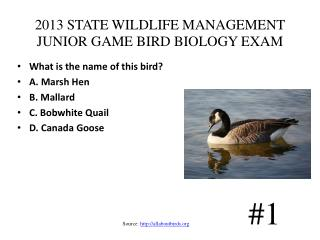 2013 STATE WILDLIFE MANAGEMENT JUNIOR GAME BIRD BIOLOGY EXAM