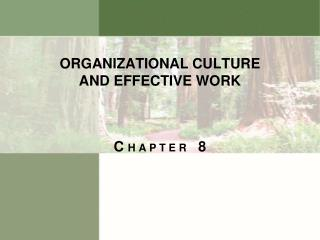 ORGANIZATIONAL CULTURE AND EFFECTIVE WORK
