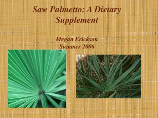 Saw Palmetto: A Dietary Supplement Megan Erickson Summer 2006