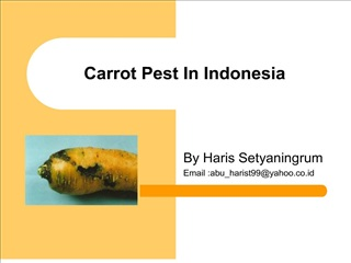 carrot pest in indonesia