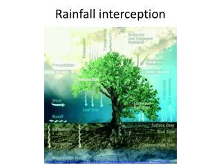 Rainfall interception