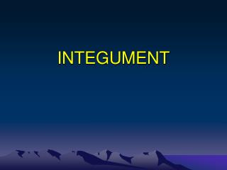 INTEGUMENT