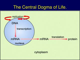 The Central Dogma of Life.