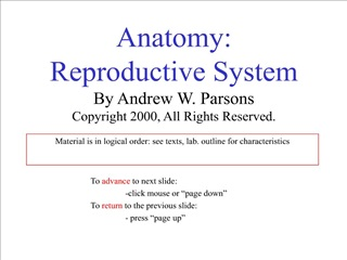 anatomy: reproductive system by andrew w. parsons copyright 2000, all rights reserved.