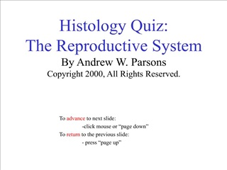 histology quiz: the reproductive system by andrew w. parsons copyright 2000, all rights reserved.