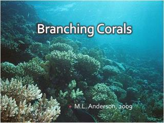 Branching Corals