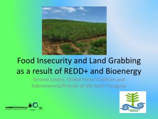 Food Insecurity and Land Grabbing as a result of REDD+ and  Bioenergy