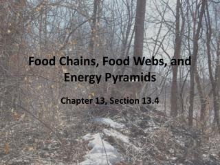 Food Chains, Food Webs, and Energy Pyramids
