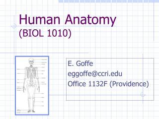 Human Anatomy (BIOL 1010)