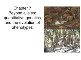Chapter 7 Beyond alleles: quantitative genetics and the evolution of phenotypes