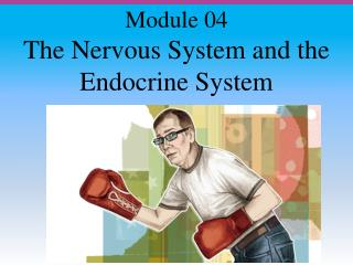 The Nervous System and the Endocrine System