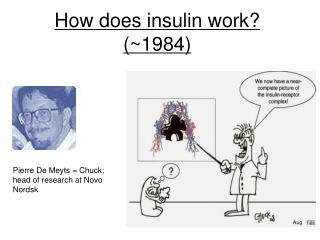 How does insulin work? (~1984)