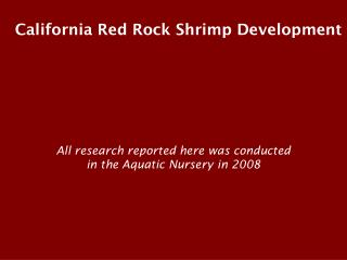 California Red Rock Shrimp Development