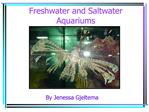 freshwater and saltwater aquariums