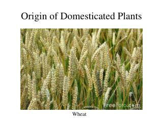 Origin of Domesticated Plants