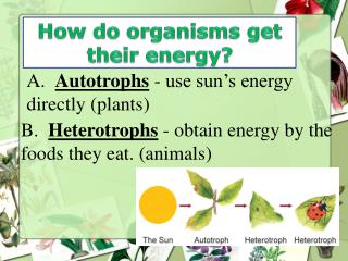 How do organisms get their energy?