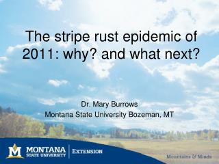 The stripe rust epidemic of 2011: why? and what next?