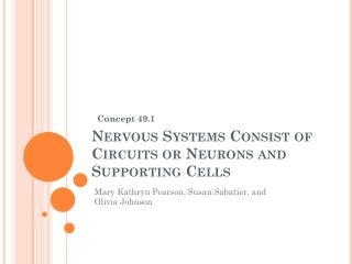 Nervous Systems Consist of Circuits or Neurons and Supporting Cells