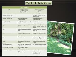 Tips for the Perfect Lawn