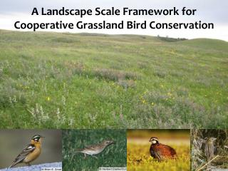 A Landscape Scale Framework for Cooperative Grassland Bird Conservation
