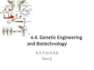 4.4. Genetic Engineering and Biotechnology