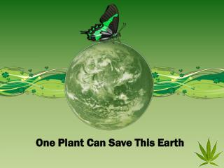 One Plant Can Save This Earth