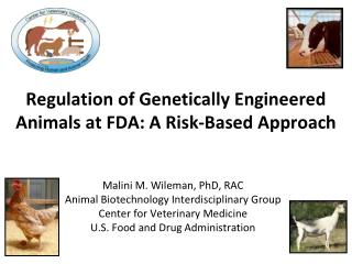 Regulation of Genetically Engineered Animals at FDA: A Risk-Based Approach
