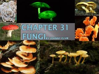 Chapter 31  fungi by johnny elvir