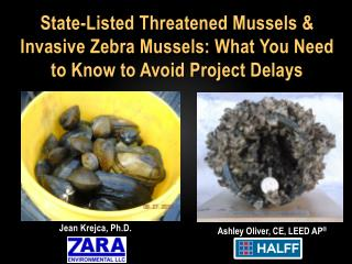 State-Listed Threatened Mussels & Invasive Zebra Mussels: What You Need to Know to Avoid Project Delays