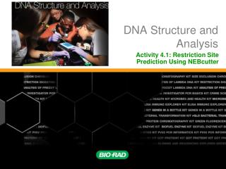 PPT  Restriction    Digestion    and Analysis of Lambda    DNA    Kit PowerPoint Presentation  ID 503292