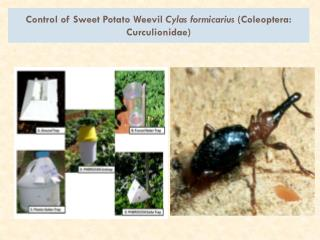 Control of Sweet Potato Weevil  Cylas formicarius ( Coleoptera :  Curculionidae )