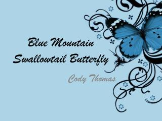 Blue Mountain Swallowtail Butterfly