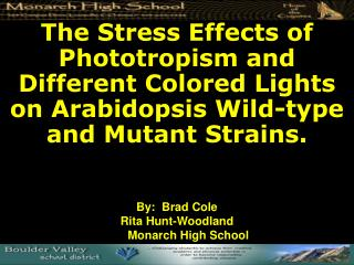 The Stress Effects of Phototropism and Different Colored Lights on Arabidopsis Wild-type and Mutant Strains.