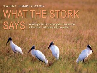 CHAPTER  9 COMMUNITY ECOLOGY WHAT THE STORK SAYS