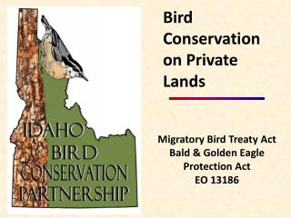 Migratory Bird Treaty Act Bald & Golden Eagle Protection Act EO 13186