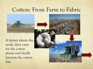 Cotton: From Farm to Fabric