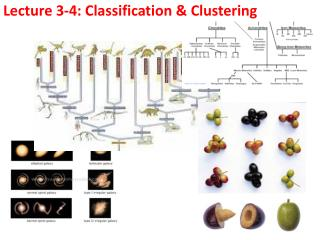 Lecture  3-4:  Classification  & Clustering