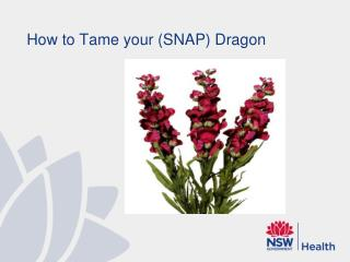 How to Tame your (SNAP) Dragon